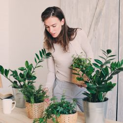 How Plants Help to Clean…
