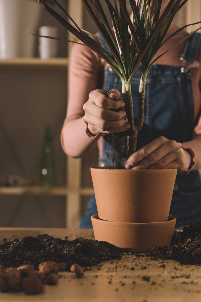 Make sure your plant has room to grow. If the pot it's sold in is too small, re-potting is key to good indoor plant care and can even help save a dying plant.