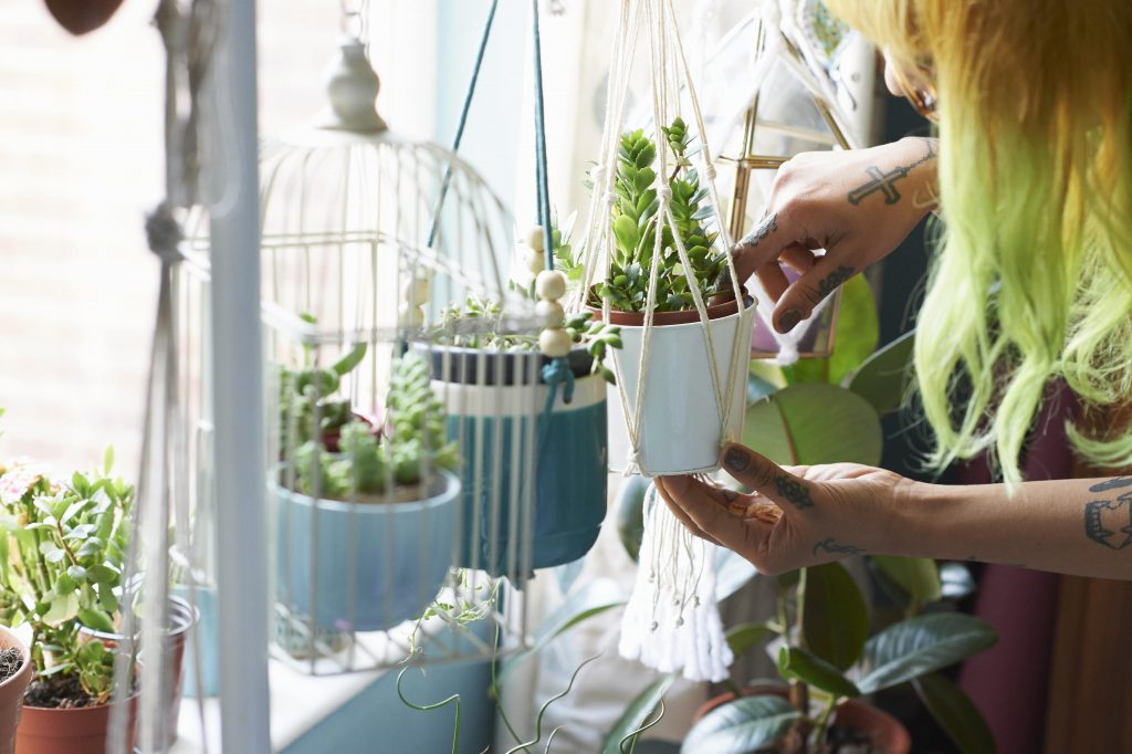 Hanging plants can also include easy care varieties, just don't hang them somewhere that's inaccessible for watering.