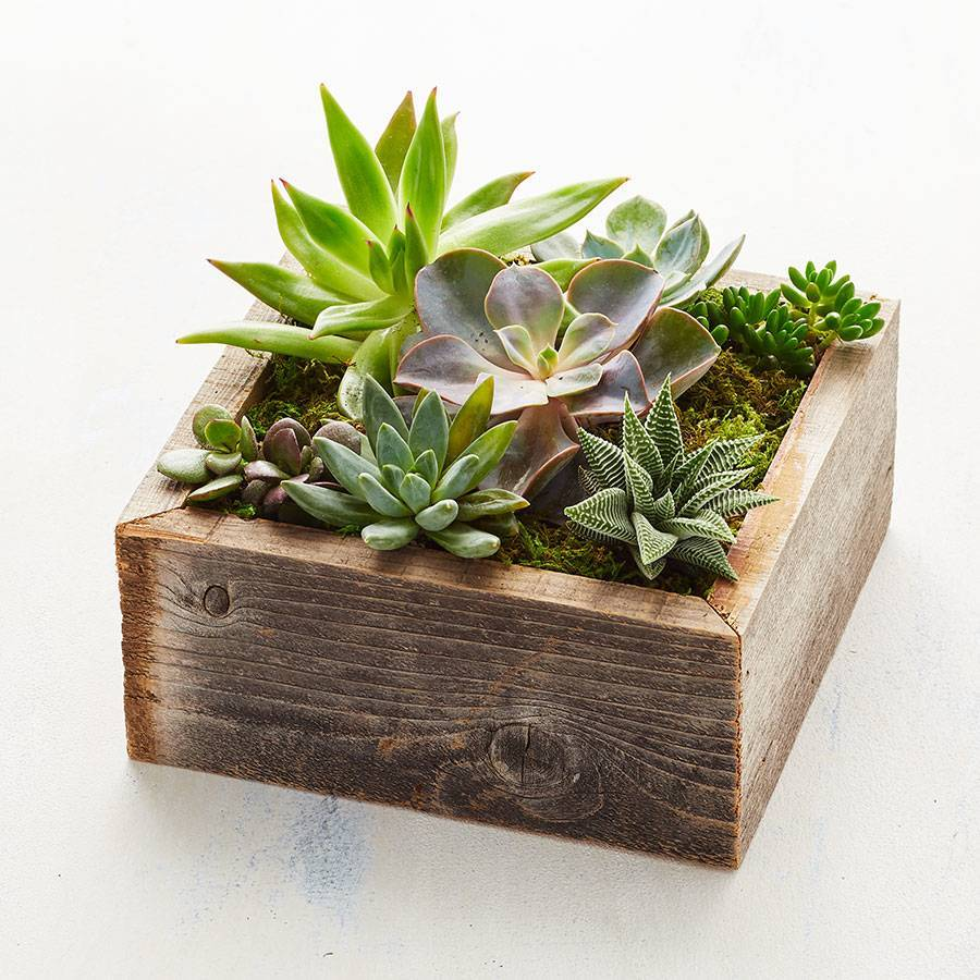 Reclaimed Wood Succulent Garden, great for a christmas plant table topper. Check it out here