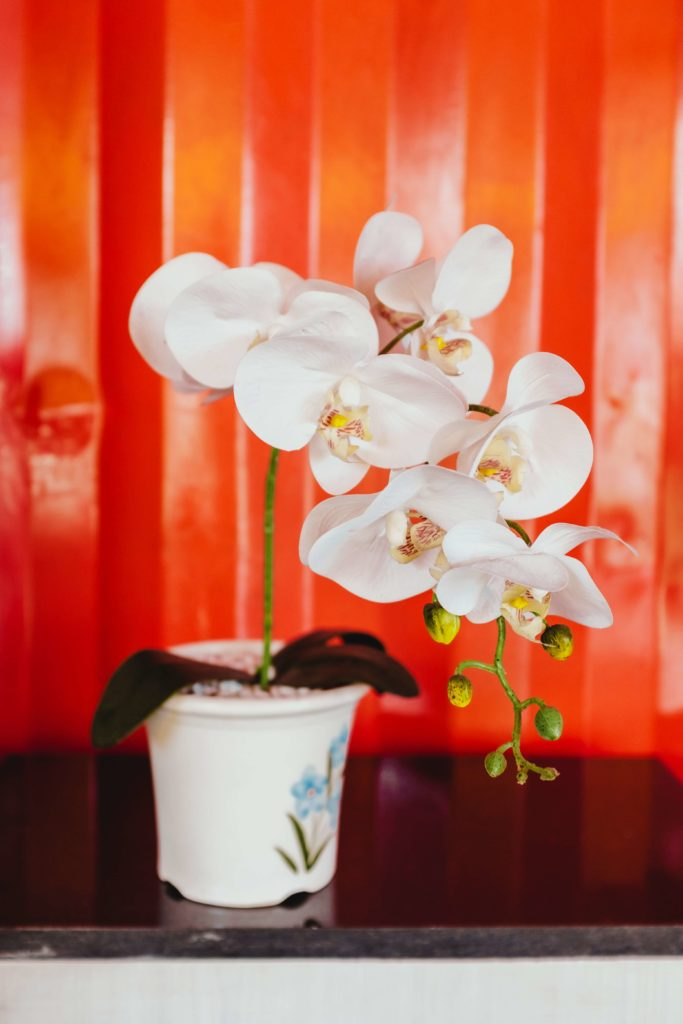 White orchids always bring a classy touch to any space