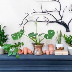 How to Grow Plants Sustainably…