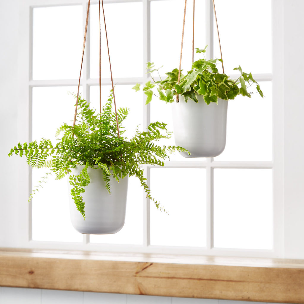 How To Care For Hanging Plants Hanging Plant Care Plants Com