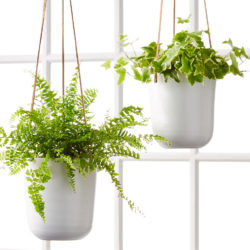 Hanging Plant Care