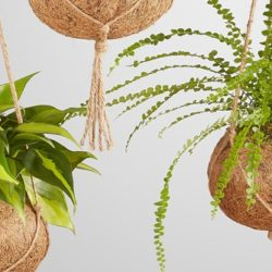 Meet the Kokedama: Origin and…