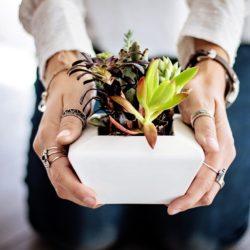 Cacti & Succulent Care Tips