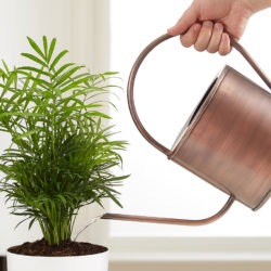 Common House Plant Problems and…