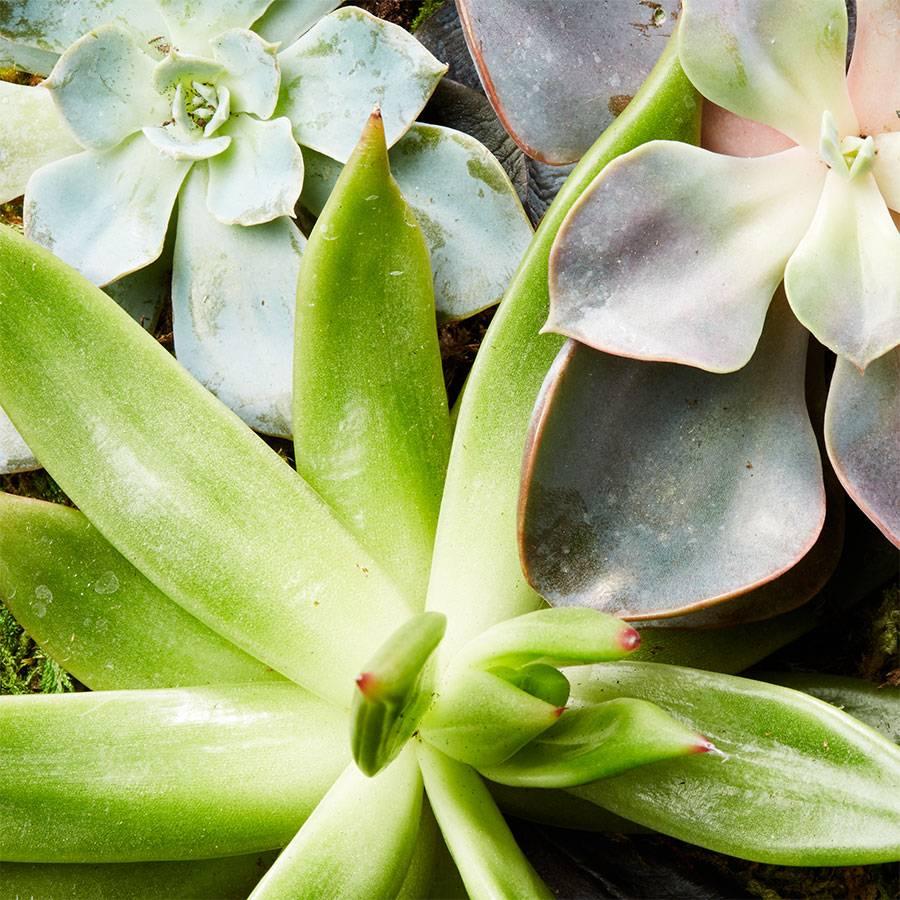 Reclaimed Wood Succulent Garden-