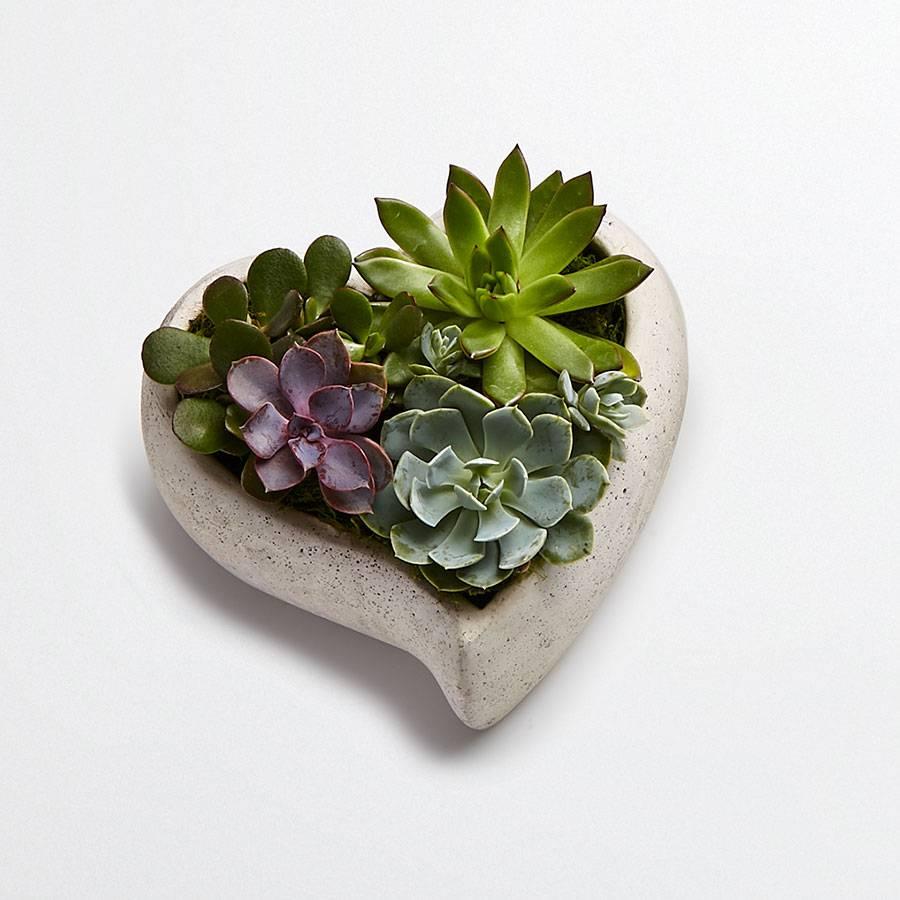 Loving Memory Succulent Garden