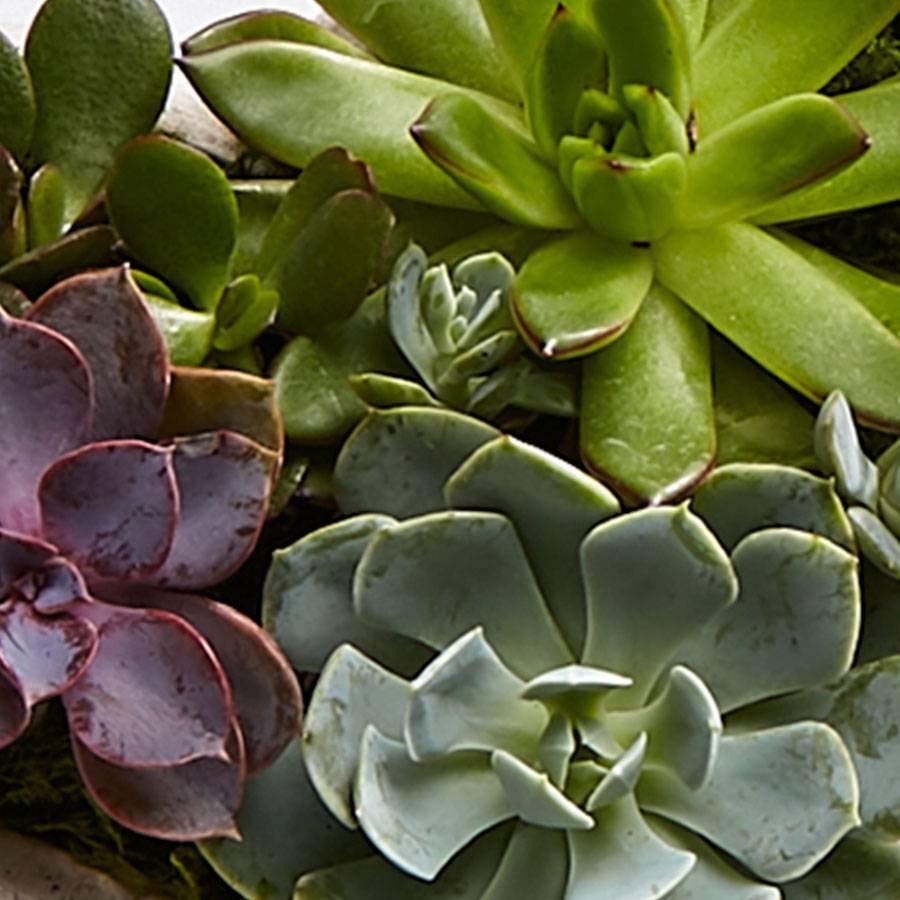 Sweet Succulent Heart Garden