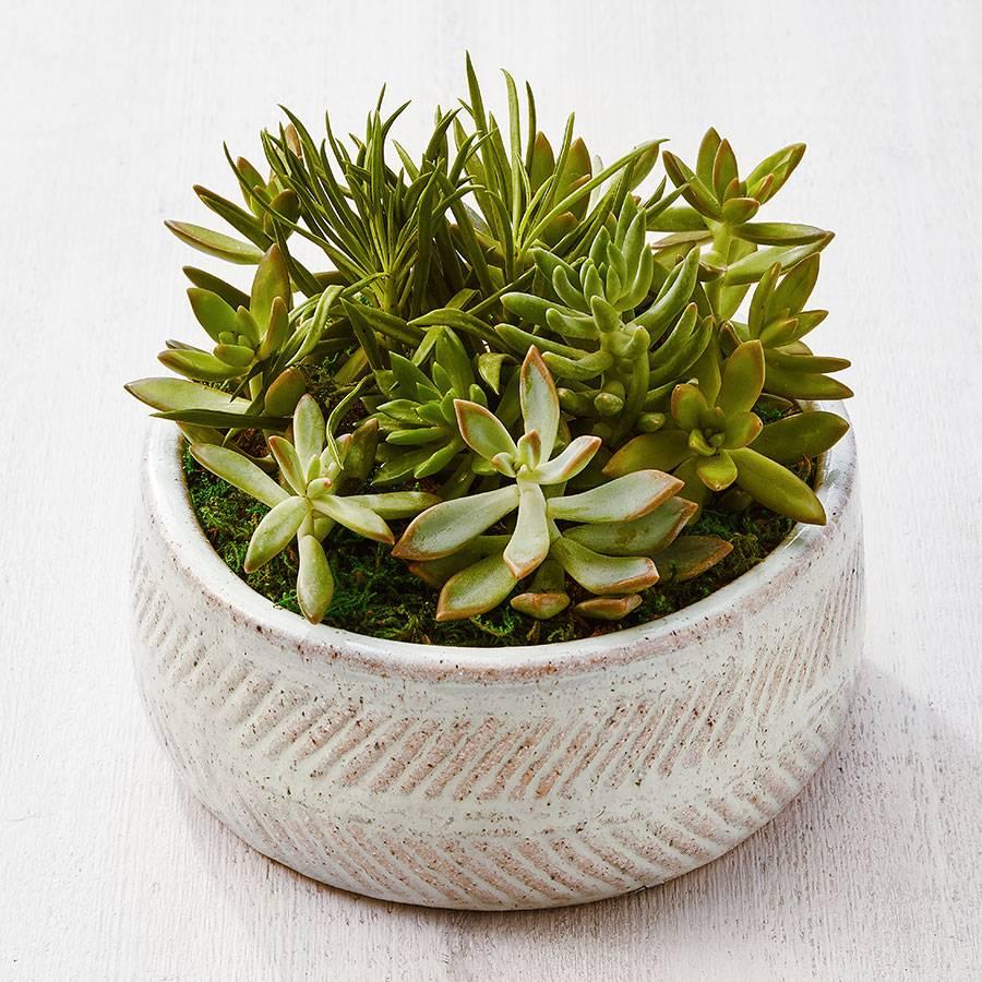 Succulent Dish Garden