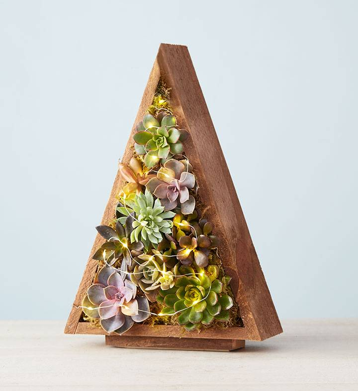 Reclaimed Tree Succulents