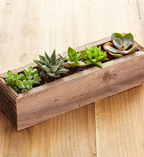 Reclaimed Wood Rectangle Succulents