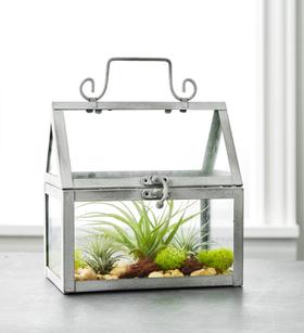 DIY Air Plant Terrarium Garden