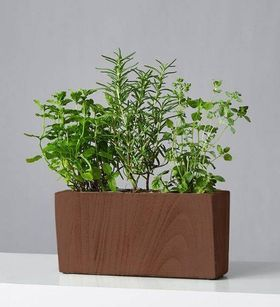 Mini Herb Garden Trio: Mint, Oregano, Rosemary