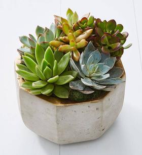 Concrete Succulent Garden