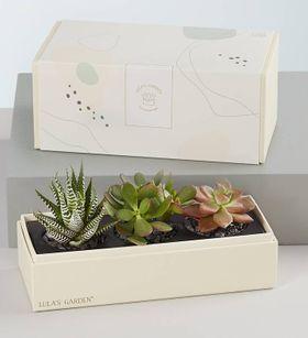 Lula's Garden® Succulents